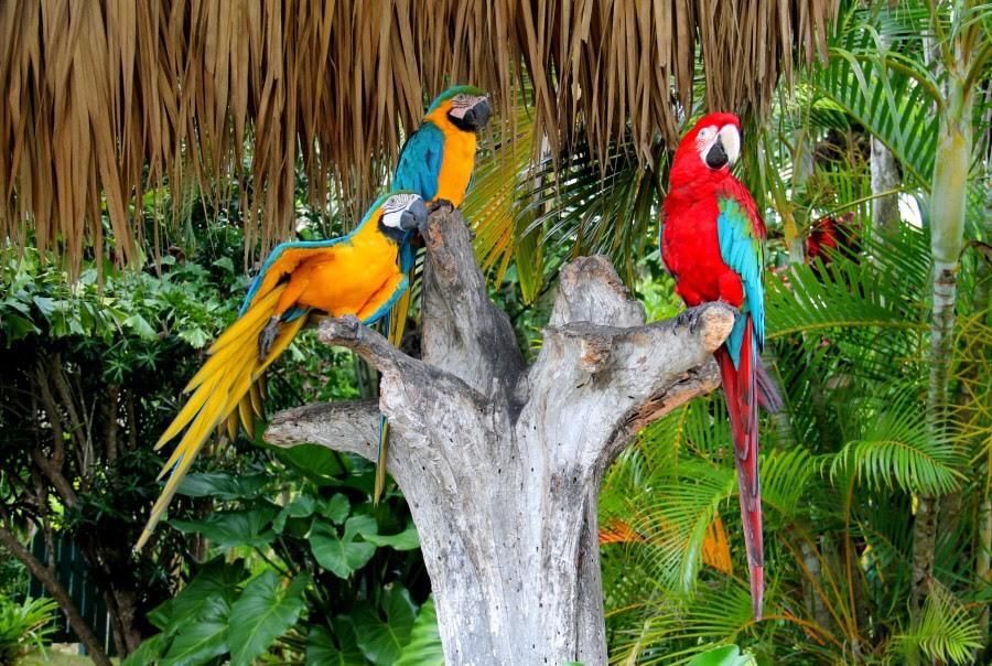 Манати парк в Доминиканской республике