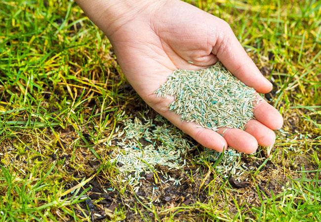Весна пришла - пора сажать! Покупка семян с доставкой
