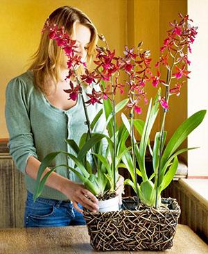 Условия содержания орхидеи