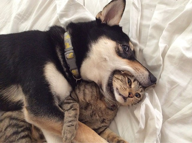 Хотите собаку или кота?
