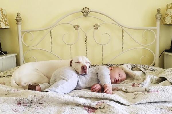 Собака, спасенная от живодеров, ложится спать рядом с младенцем. Интернет в восторге от этого зрелища!