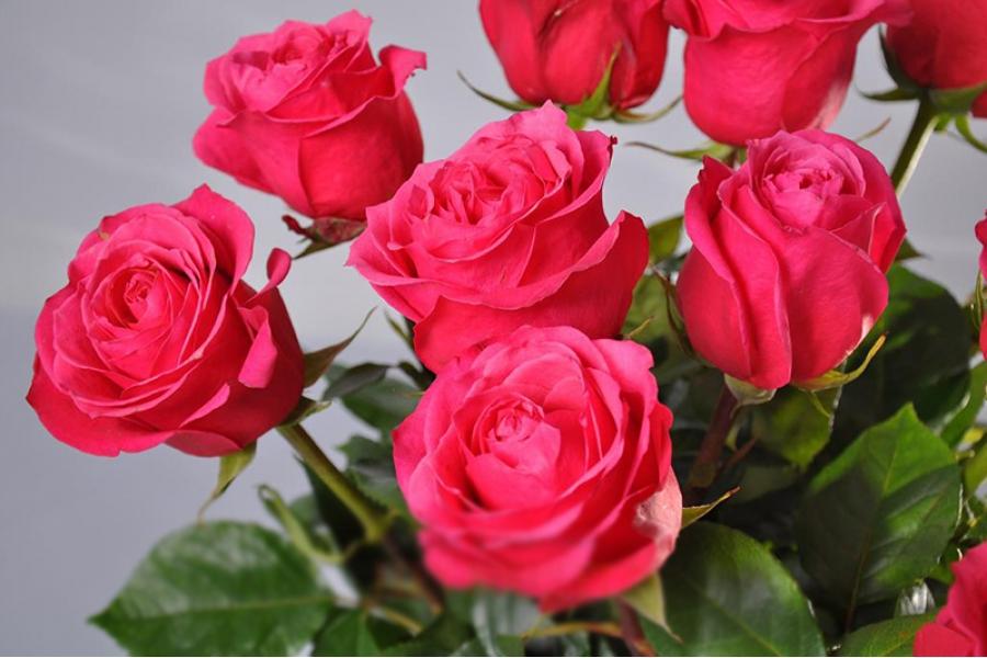 Доставка и заказ цветов в Казахстане