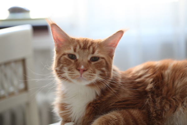 «БОРЯ, Б**, ОТДАЙ МНЕ БУЛКУ!» Видео с жадным котом взорвало Сеть!
