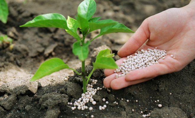 Уход за собственным урожаем и растениями