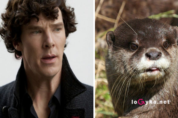 Картинки по запросу животные похожие на знаменитостей