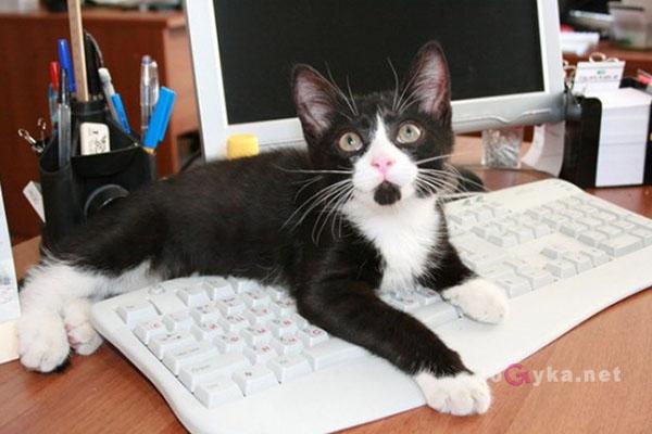 почему кошка ложится на ноутбук